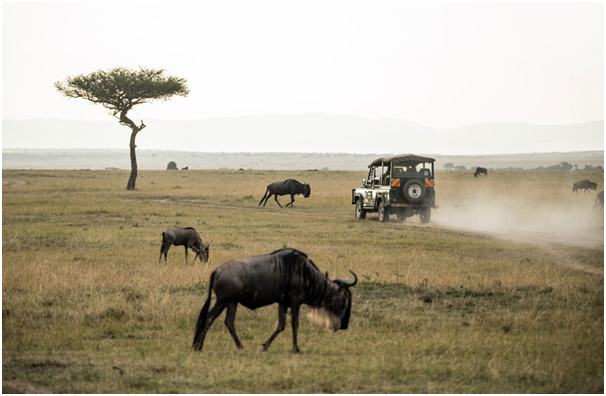 Exploring The Wild: Complete Your Travel Experience